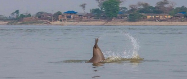 Dolphin Watching in Nepal| Sapta Koshi River|