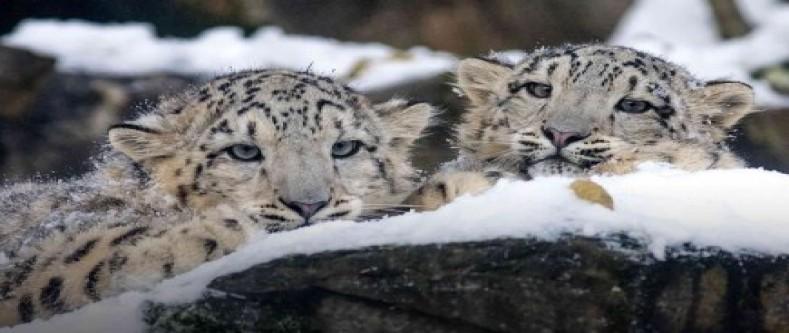 Snow Leopard Trek in Dolpo