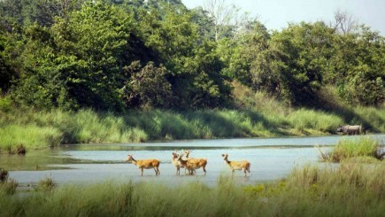 Bardiya National Park Luxury